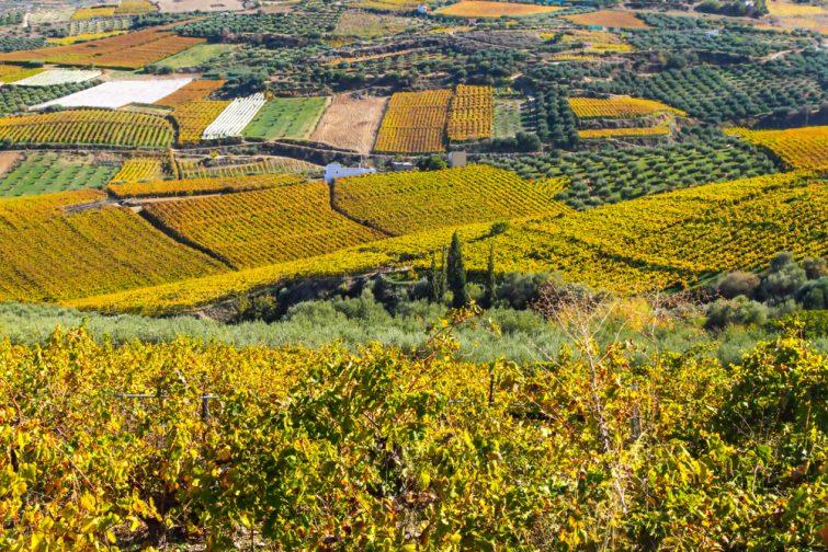 vignes-crete