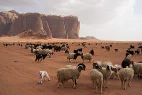 Wadi Rum désert