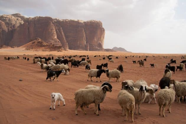 Visiter le désert de Wadi Rum : guide complet