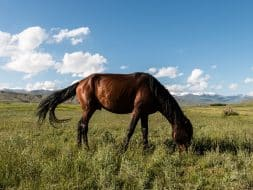 Horse lush pasture kyrgyzstan