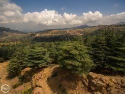 Forêt de cèdres Liban
