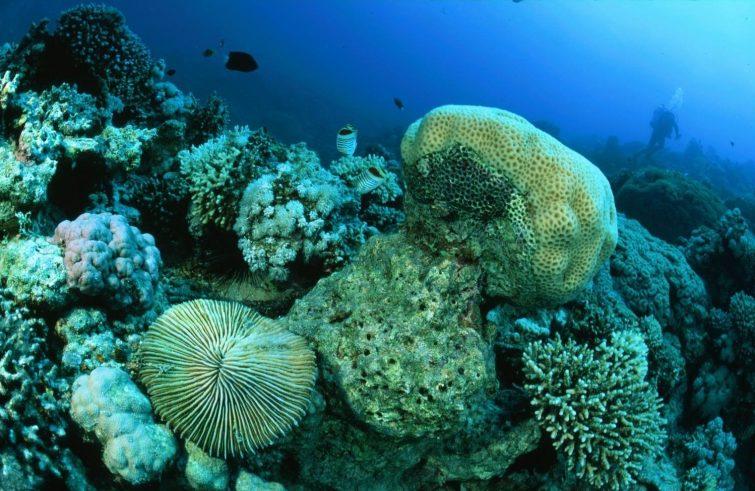 aqaba-parc-marin