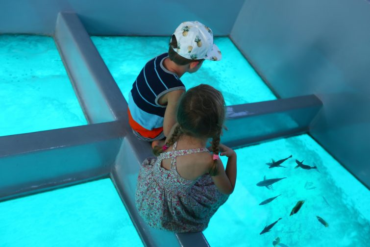 bateau-fond-verre-visiter-aqaba