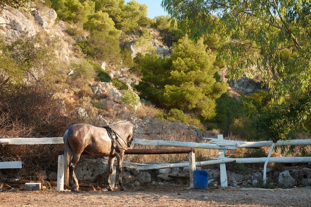 L'équitation à Agistri, un incontournable