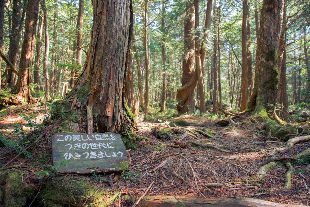 Forêt des suicides au Japon