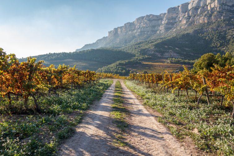 Les vignobles de la Province de Tarragone