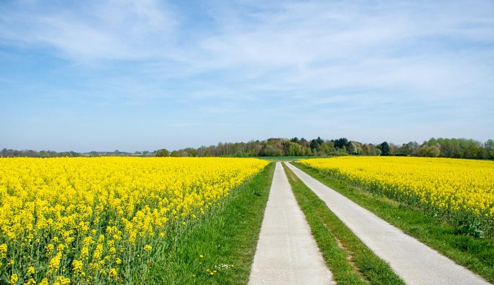 Week-end à la campagne à proximité de Bruges