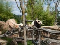 Le Zoo de Beauval en Camping-Car