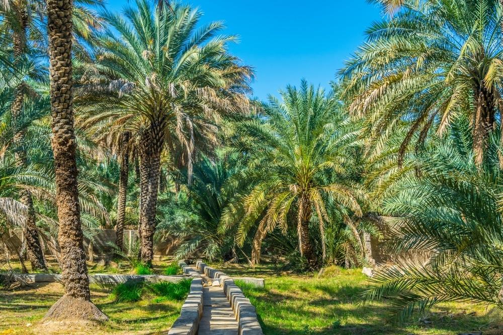 L'oasis Al-Aïn