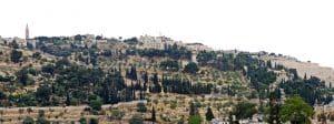 Visiter le Mont des Oliviers : réservations et tarifs