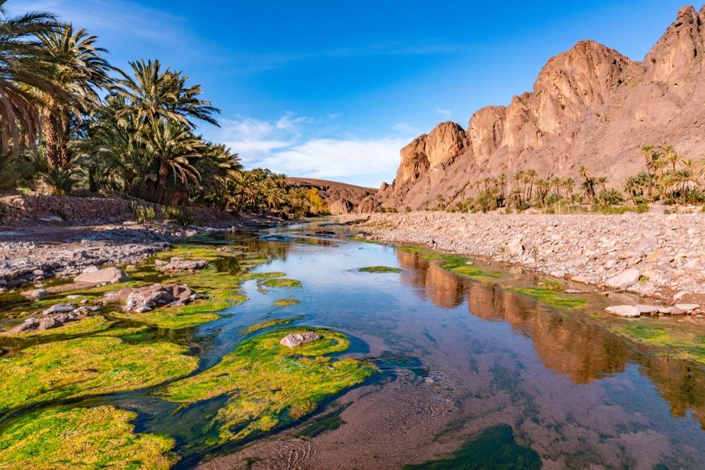 L'Oasis de Fint, photo du Maroc