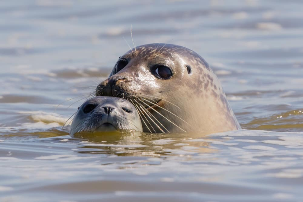 Week-end insolite dans la Baie de Somme pour découvrir les phoques