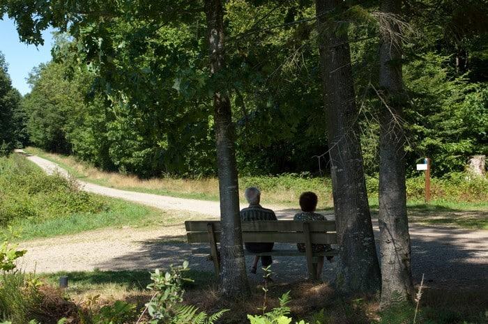 La forêt des Vaseix - randonnées Haute-Vienne