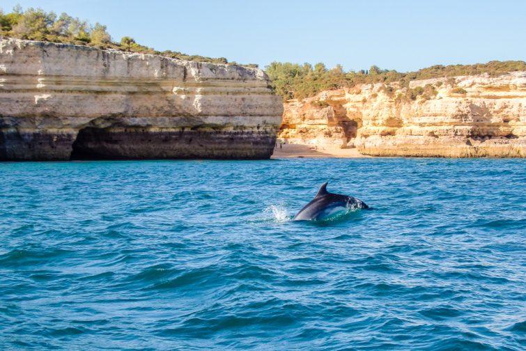 Observer les dauphins visiter Albufeira