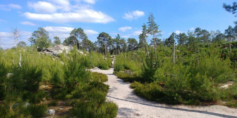 randonnées forêt fontaineaubleau