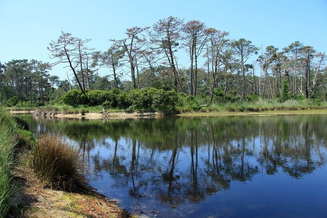 Randonnée Gironde : Les réservoirs de Piraillan