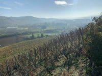 Randonnée autour de Lyon : Le sentier des vignes