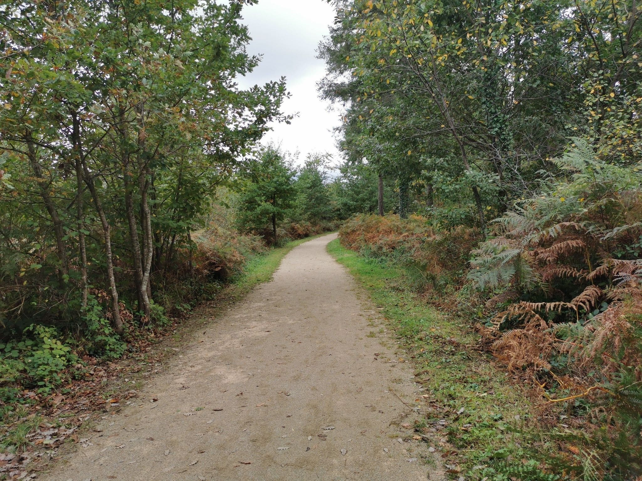 Randonnée Tarn : La forêt de Sérenac