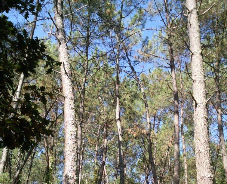 La forêt d'Ambrus