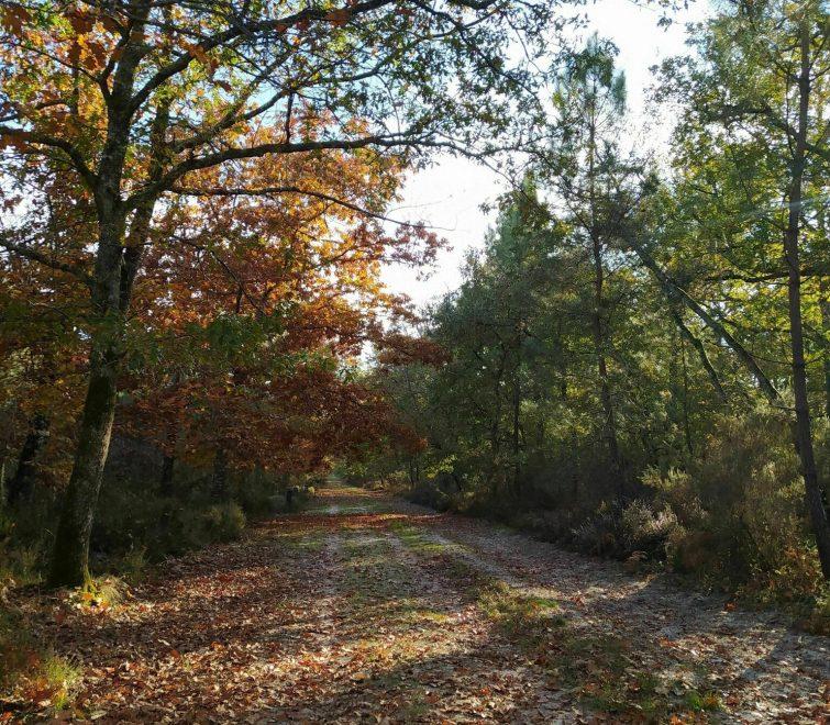La forêt de Campet