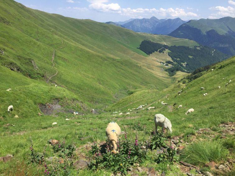 Κορυφή πεζοπορίας Céciré Bagneres de luchon