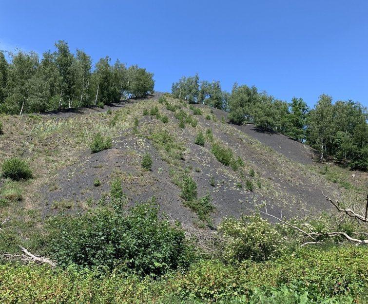 Le tour des terrils dans le bassin minier