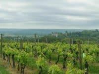 Les vignobles de Buzet