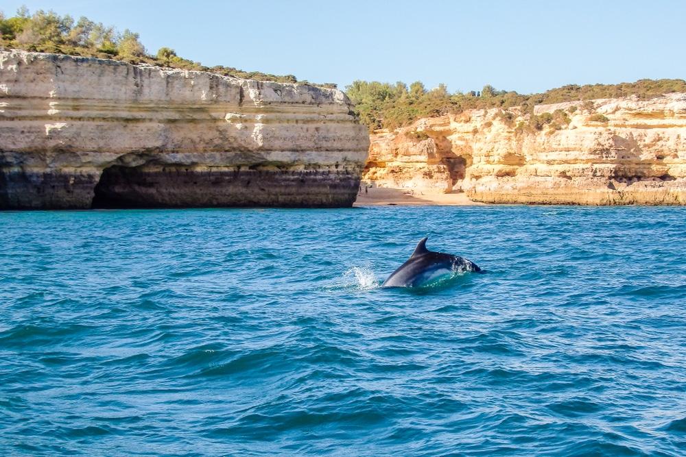 Visiter Vilamoura : Observer les dauphins