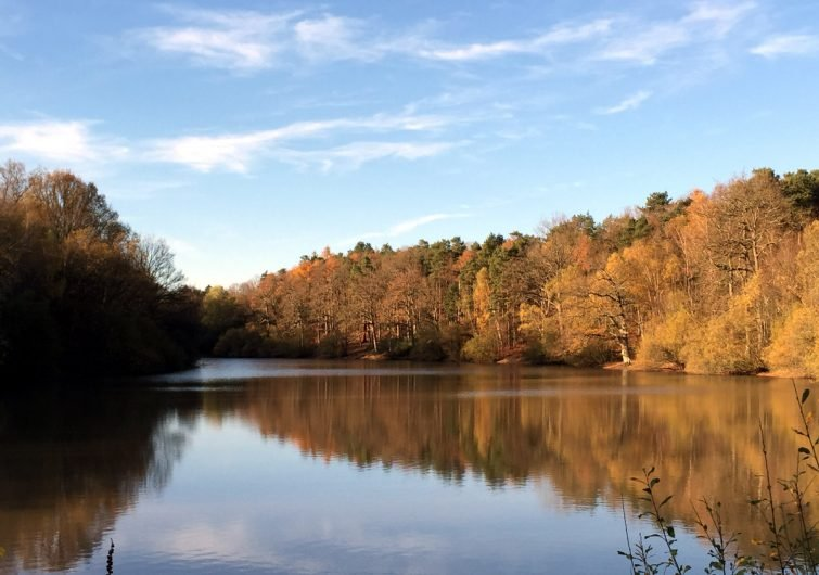 l'étang de Gruyer