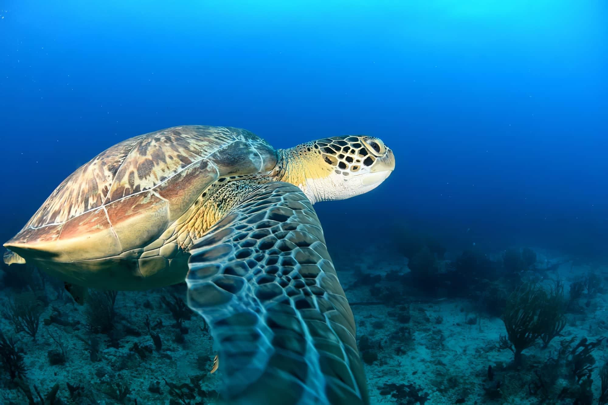 Plongée Martinique : L'Anse Dufour et l'Anse Noire