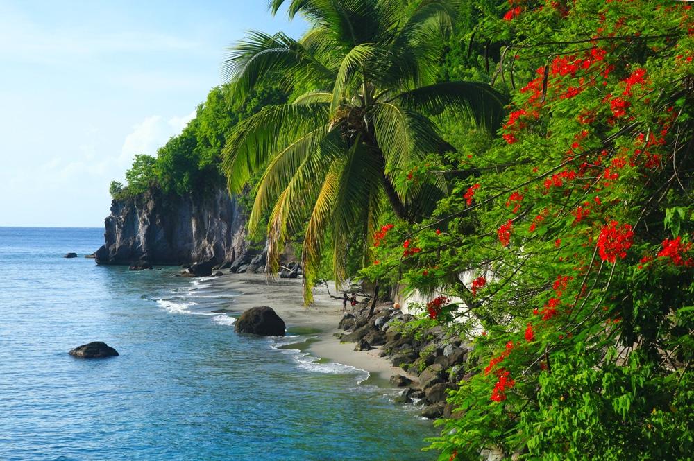 Plongée Martinique : La Citadelle