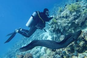Les 10 meilleurs spots où faire de la plongée et du snorkeling à Tenerife