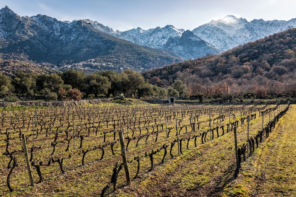 Visiter Saint-Florent : La route des vins