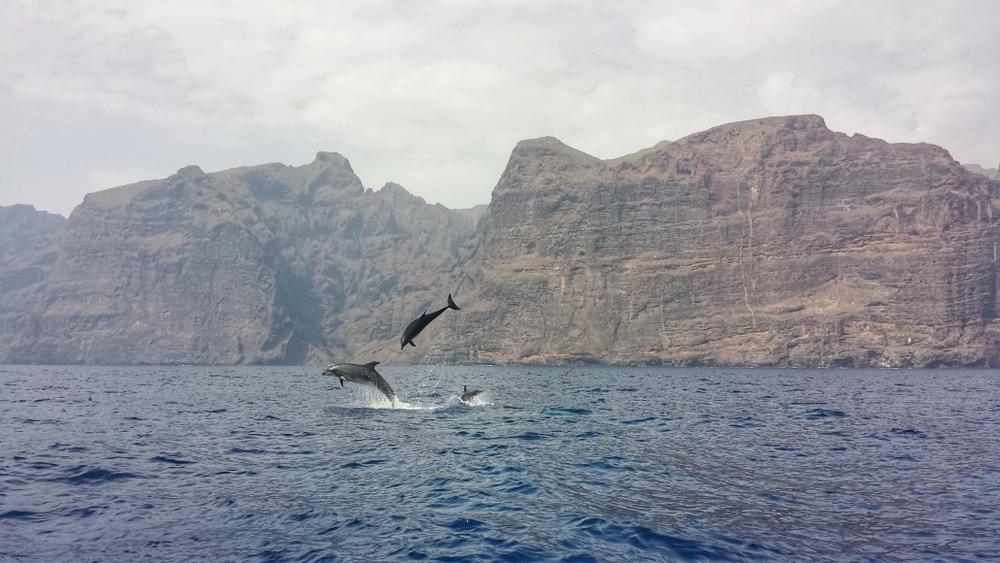 Excursion en catamaran à Tenerife pour observer les baleines et les dauphins