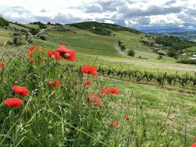 Les 6 plus belles randonnées à faire dans le Beaujolais