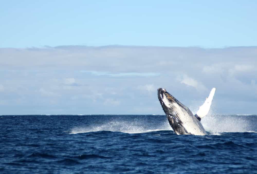 En outre-mer - dauphins baleines