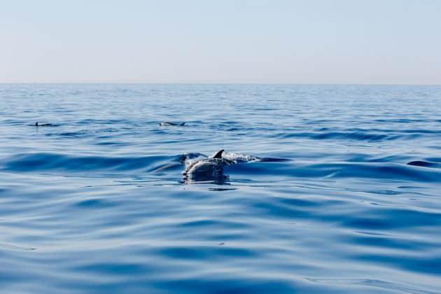 Les 6 endroits où voir des dauphins et des baleines sur les côtes françaises
