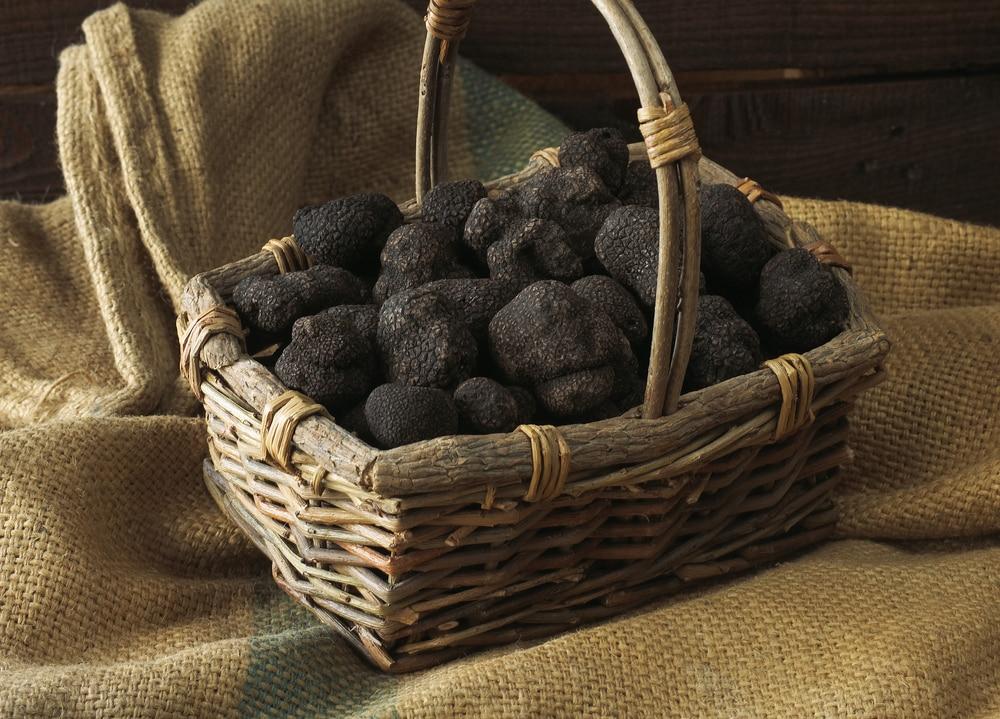 truffe lot