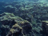 Plongée Minorque : Grotte de La Catedral (Cap d'En Font)