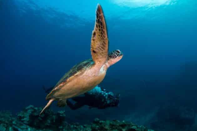 Les meilleurs spots où faire de la plongée sur l'île de La Réunion