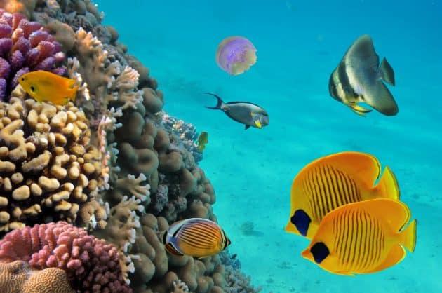 Les 8 meilleurs spots où faire de la plongée en Guadeloupe