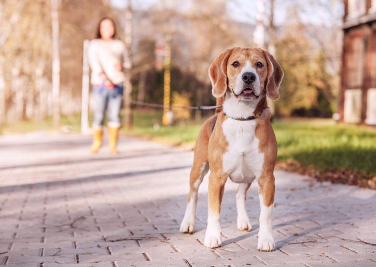chiens - gagner argent vacances