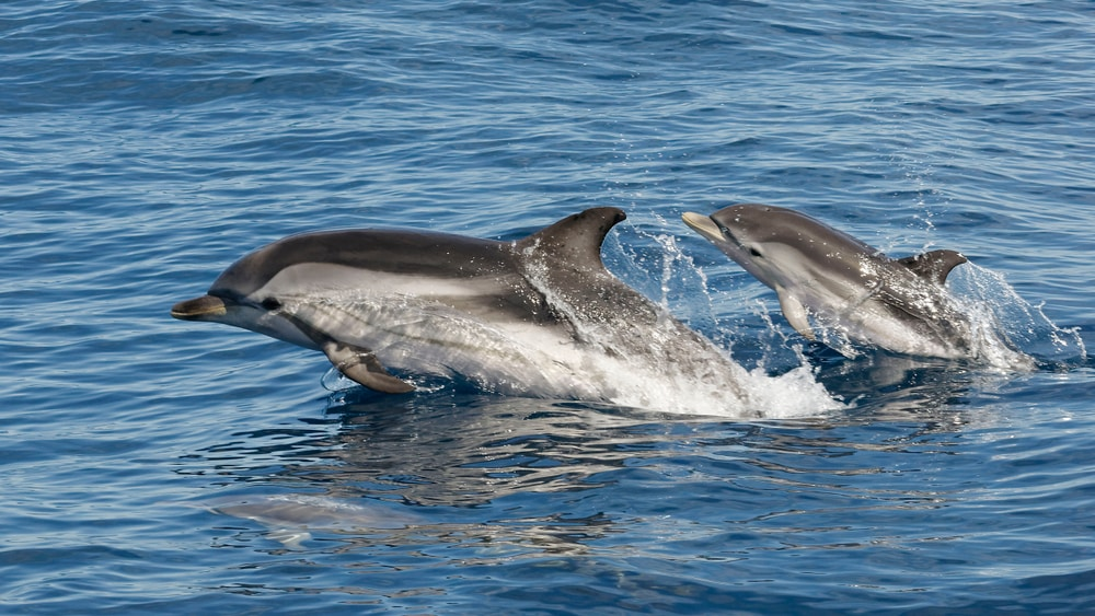 Dauphin - animaux marins france