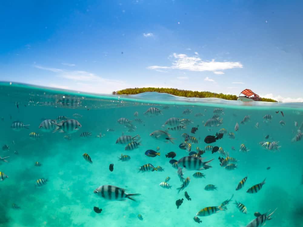 Île de Mnemba, la plus blanche - plages Tanzanie