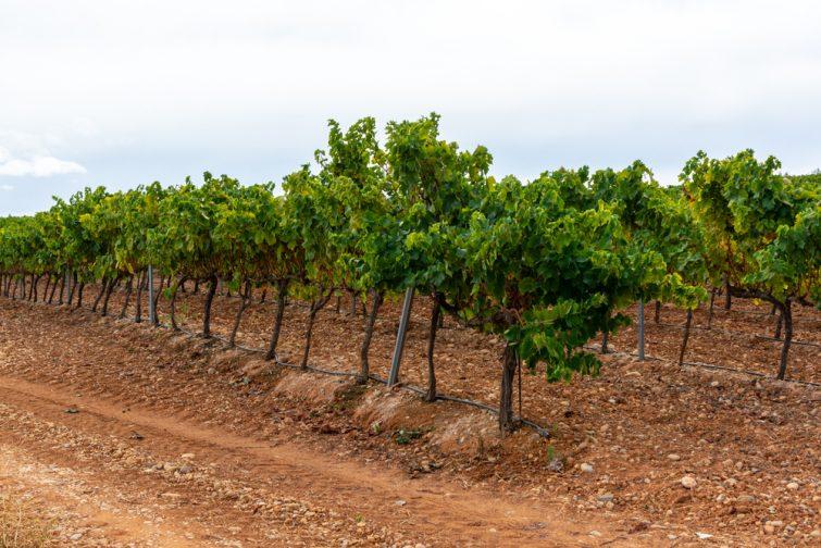 Route du Vin Montilla-Moriles - excursions Séville