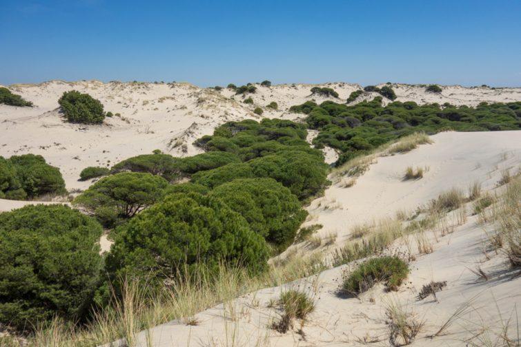 Parc Naturel Doñana