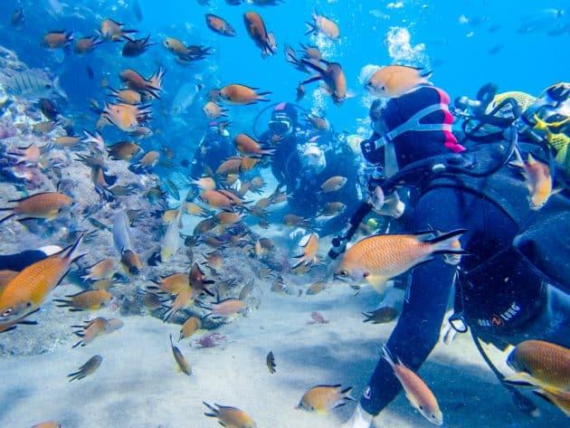 Les 8 meilleurs spots où faire de la plongée et du snorkeling à Lanzarote